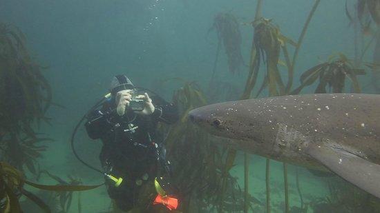 Dive Action