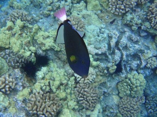 Four Winds II: Four Winds Snorkel Tour