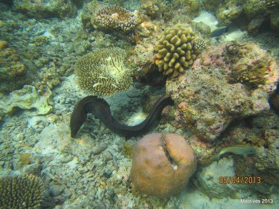 Biyadhoo Island Resort: underwaret Biyadhoo reef 5