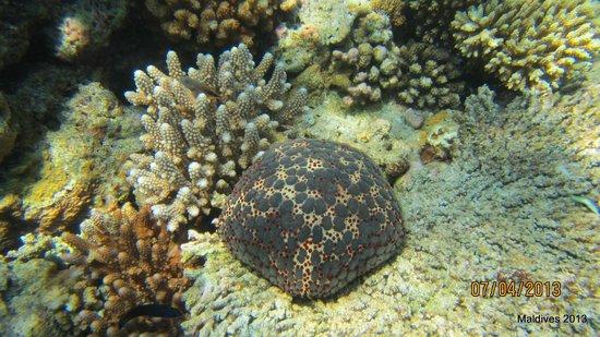 Biyadhoo Island Resort: underwaret Biyadhoo reef 6