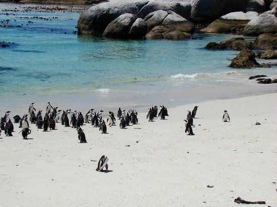 People Like Us Safaris - Day Tours: Visit the pristine cove and penguin colony at Boulders Beach