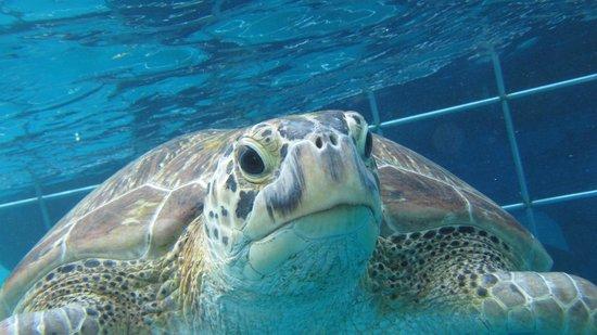 Crystal Clear Diving Phuket: Similans