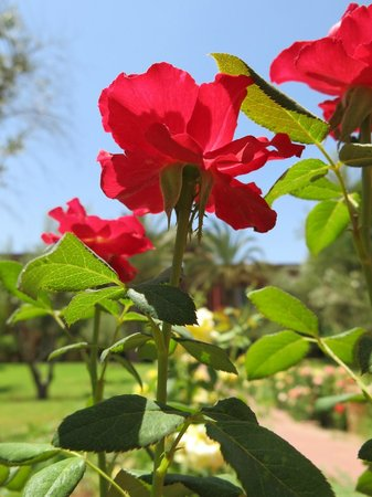 Eden Andalou Hotel Aquapark & Spa: The flowers growing in the hotel grounds