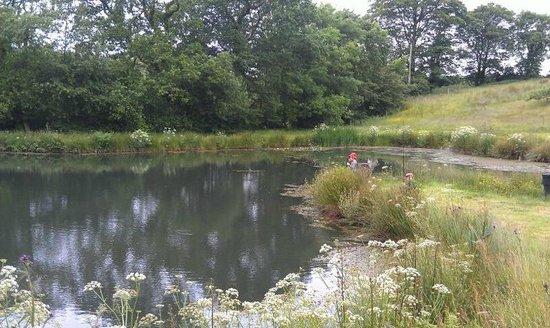Court Farm: the fishing pond