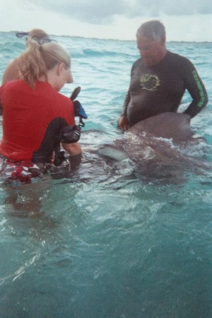 White Sand Water Sports: Capt Chris helping us with the Sting Rays...