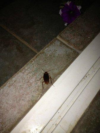 Ilios Studios : scarafaggi