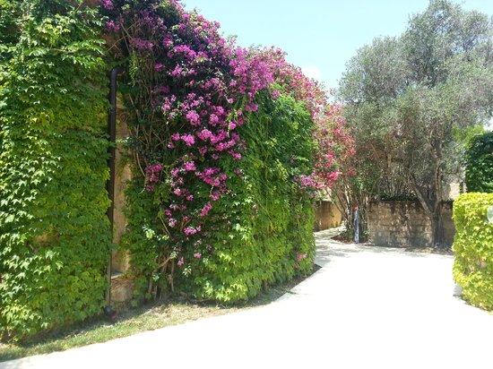VOI Floriana Resort: Joli cadre fleuri