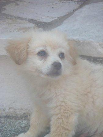 Hotel Costas Golden Beach: puppy in Afionas