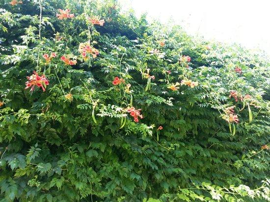 VOI Floriana Resort: Cadre fleuri