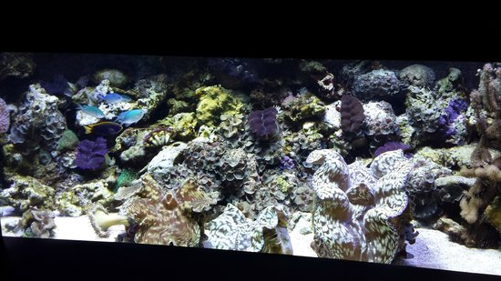 Very Jealous Of This Coral Clam Tank Picture Of Mystic