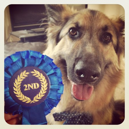 "The Wheelwrights Arms: Dobby the ""pub dog"" won second place at the village fete, (most handsome dog)"