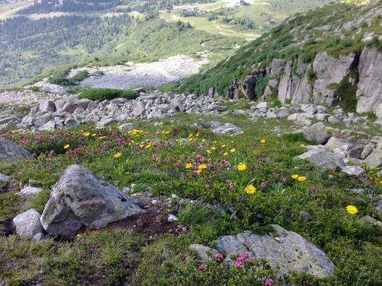 Albergo Eden: Prato fiorito