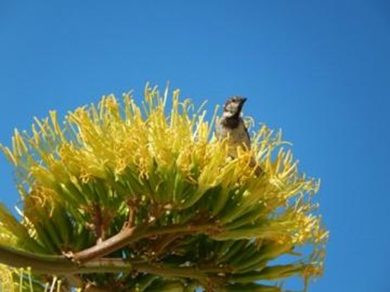 Casa Tres Palmeiras: Many birds love to visit the trees on or outside of the property.