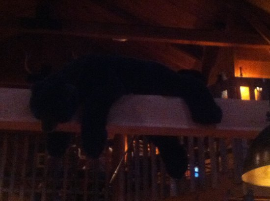 Bogart's Restaurant & Tavern : Bear resting in the dining room