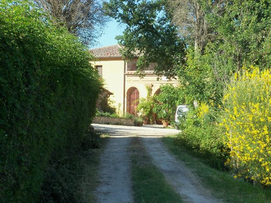Agriturismo  Podere PratoVecchio: Il viale di accesso al Casale