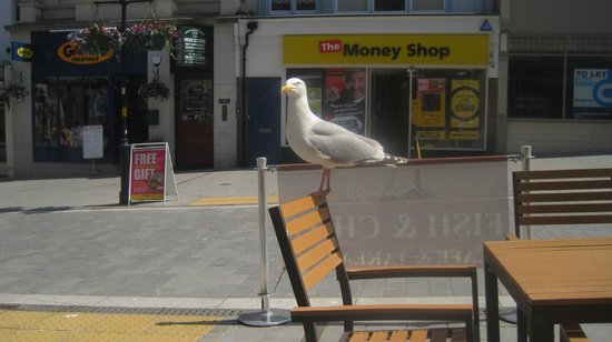 Darbey's Traditional Fish & Chips: the sea gull