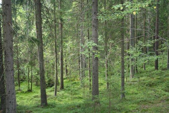 Eksjo, Swedia: Skuruhatt & Skurugata