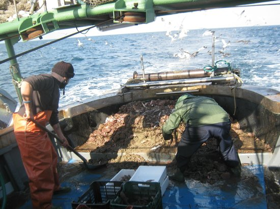 Ristorante L'Olimpo: pescatori a lavoro