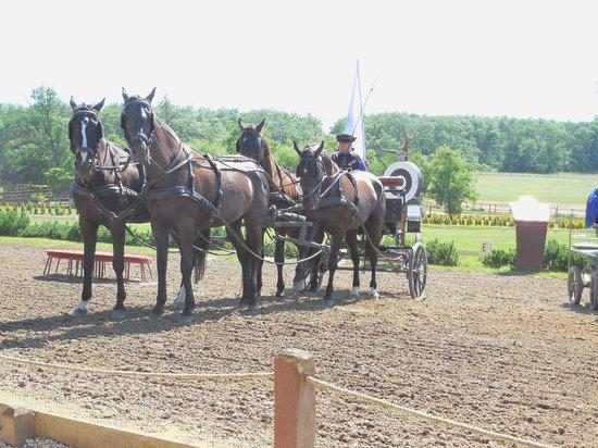 Lazar Equestrian Park: Carriage team
