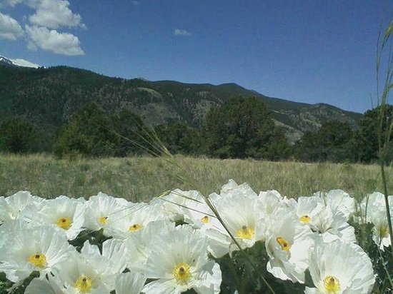 Heart of Rockies Campground: June wildflowers at Heart of the Rockies RV