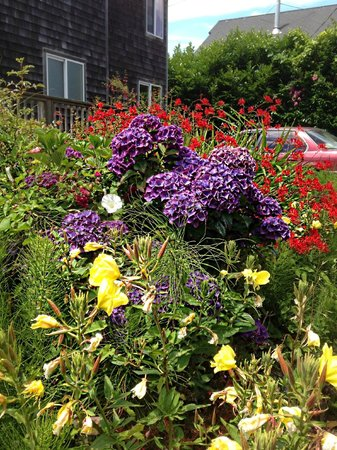 Terimore Lodging by the Sea: Gorgeous summer flowers opposite cabin