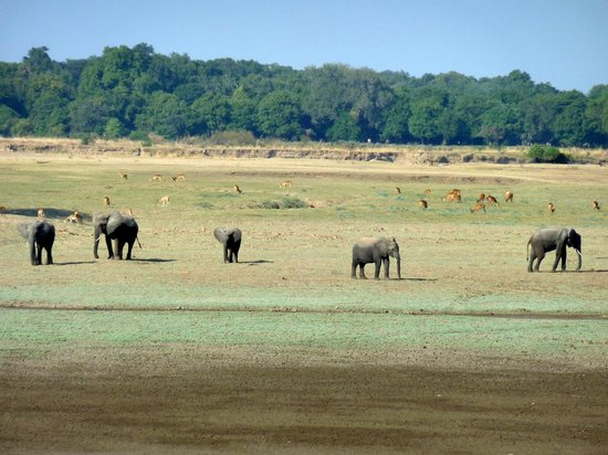 Kapani Lodge - Norman Carr Safaris: Game Drive