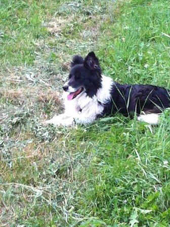 Agriturismo Il Talento Nella Quiete: our dog baby