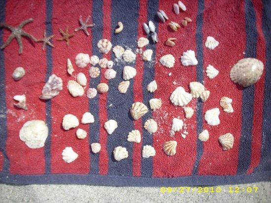 Captiva Beach: my finds!
