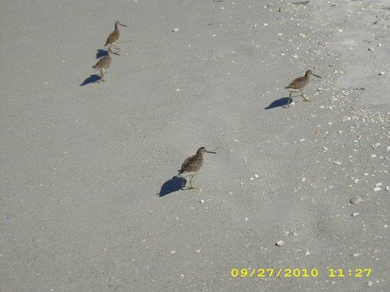 Captiva Beach : so cute :)