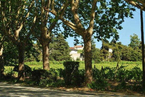 The Wine House Hotel & Restaurant: Blick auf die Weinfelder