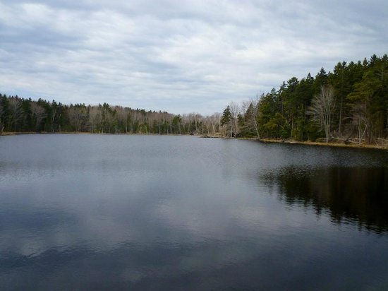 Pond at Conservation Area, Long Island, Cumberland County, Maine