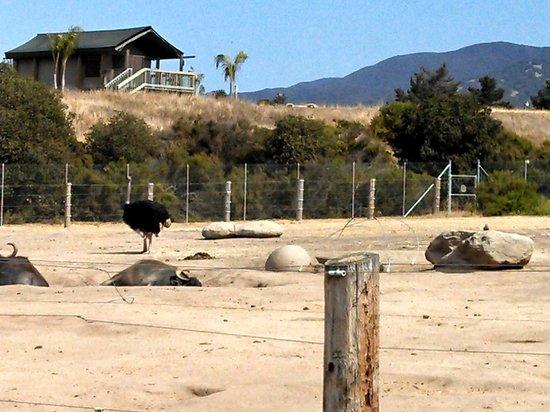 Monterey Bed And Breakfast Animals