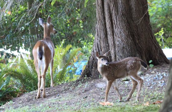 Caprice Bed & Breakfast: Doe & Fawn