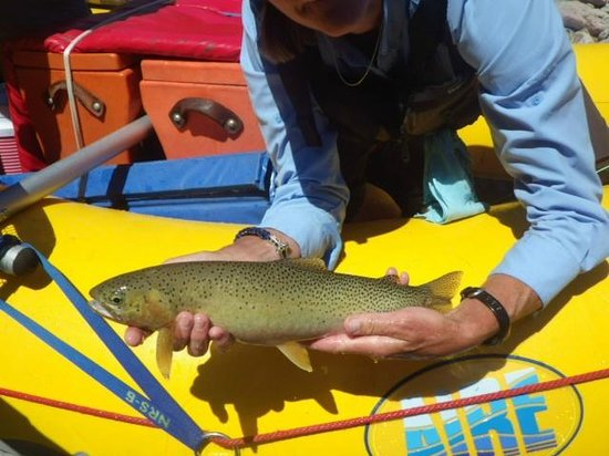 "Glacier Anglers - Day Trips: Another ""ADF"" -- All Day Fish (the kind of fish we caught all day, every day"