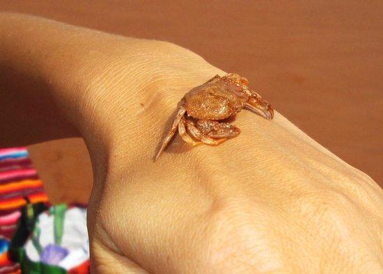 Argyle Shore Provincial Park : a baby crab
