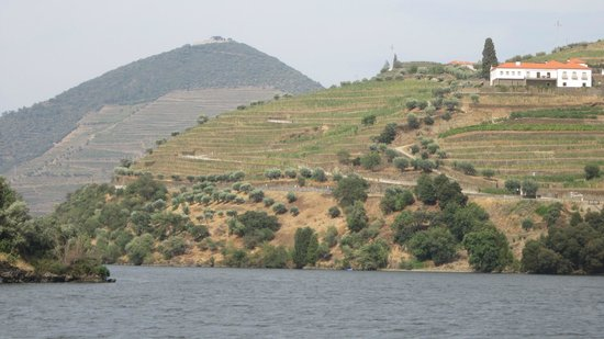Rota do Douro River Cruise - Day Tours: Enfin au coeur du sujet !