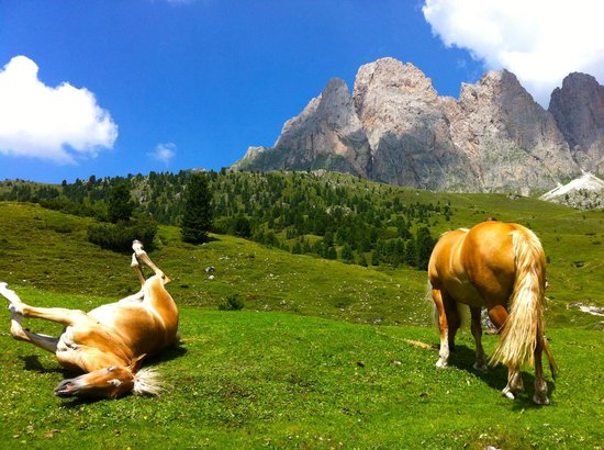 Rifugio Firenze: i cavalli del rifugio