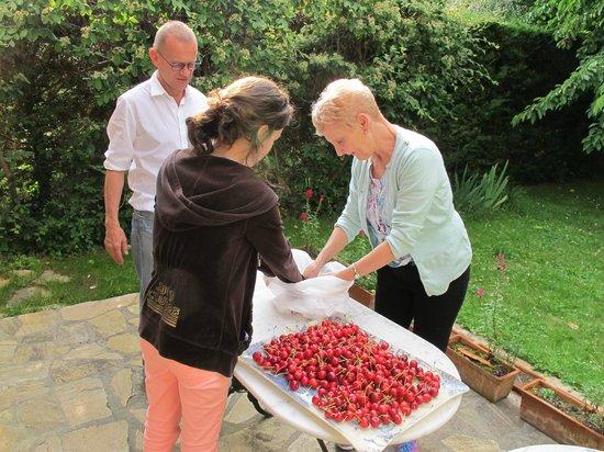 Du Côté de Rueil : Fresh cherries from the garden