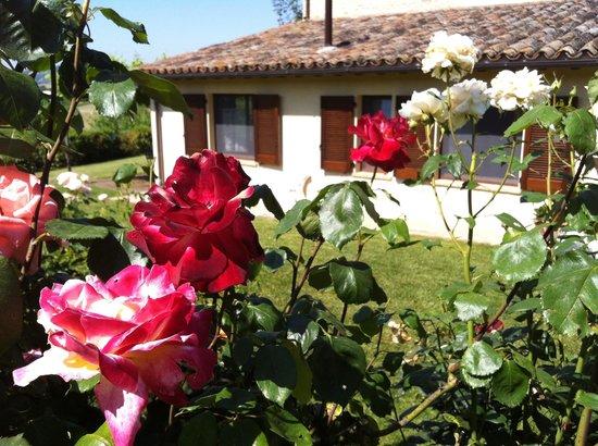 Agriturismo La Mela : Rose rosse
