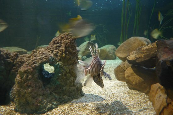 ... the Shark Tank - Foto di St Andrews Aquarium, St Andrews - TripAdvisor