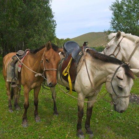 Tuul Riverside Lodge: Horse back riding