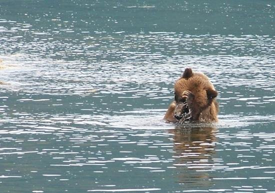 Prince Rupert Adventure Tours: Nous avons passé beaucoup de temps avec cet ours...
