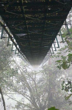 Santa Elena Skywalk: under bridge