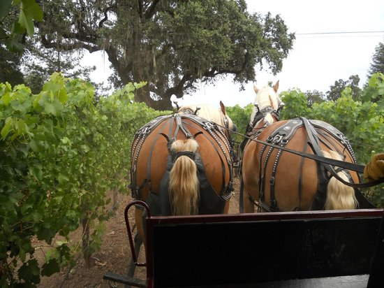 The Wine Carriage: Our designated drivers