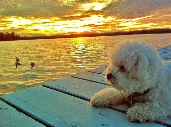 Dillman's Bay Resort : Dillmans sunset at dock with dog