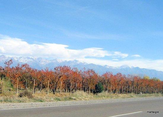 Tarde de otoño camino a Tupungato - Valle de Uco - Mendoza -Argentina