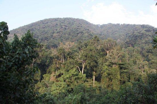 The Engagi Lodge: Bwindi Impenetrable Forest