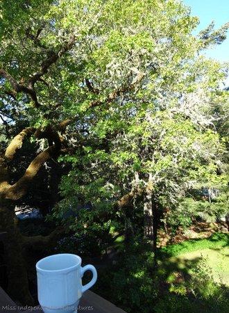Benbow Historic Inn: Morning coffee on the dinning patio
