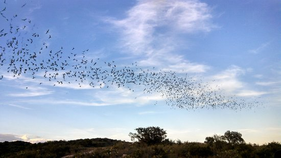 Frio Bat Flight Tours