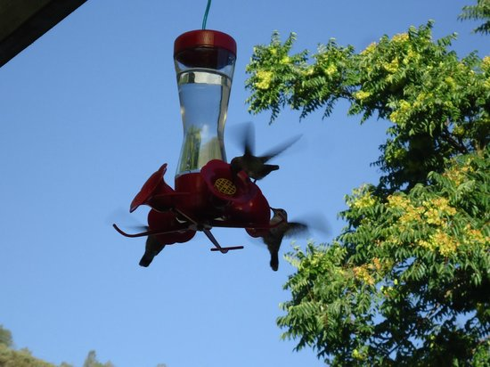 Mariposa Hotel Inn: Hummingbirds on the veranda